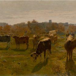 Mercat de bous